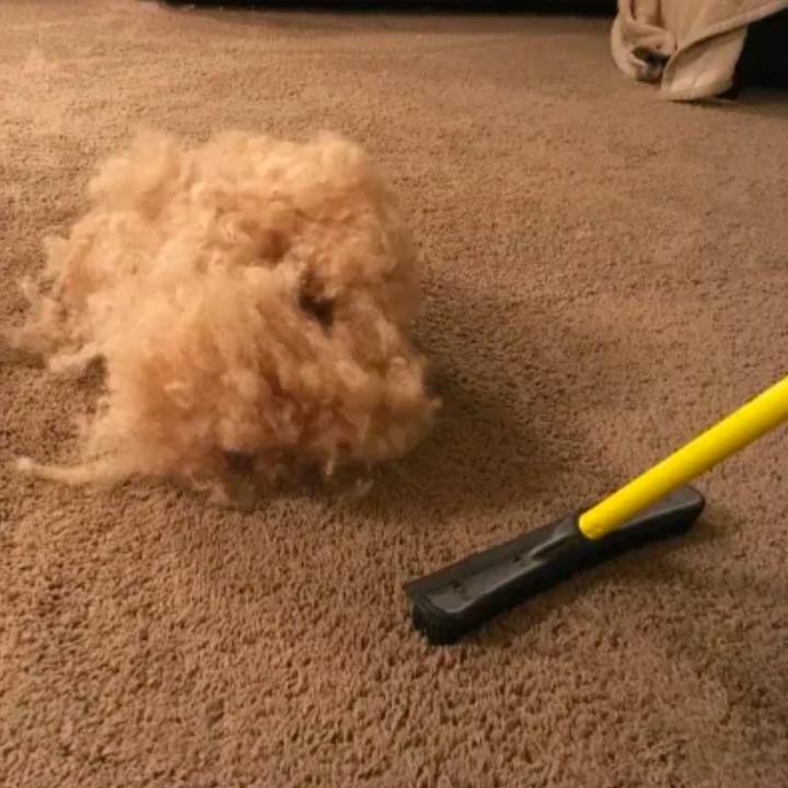 Large pile of fur beside broom on carpet