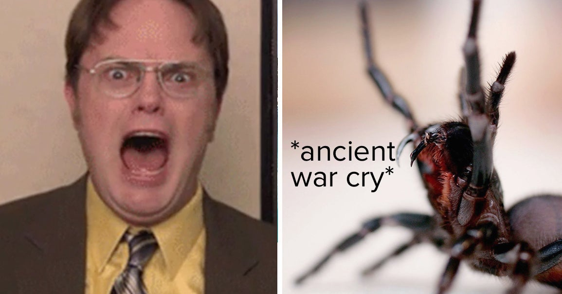 Eight Of These Spiders Will Cause You A World Of Pain. Can You Pick The One That Won't?