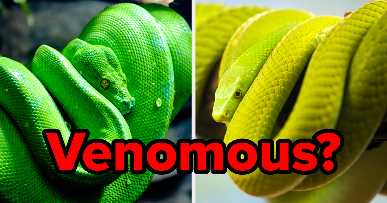 You're A Survivalist Expert If You Can Guess Which Of These 9 Snakes Isn't Venomous