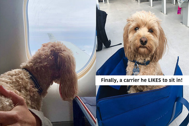9 Tips And Tricks For Anyone Traveling With A Dog