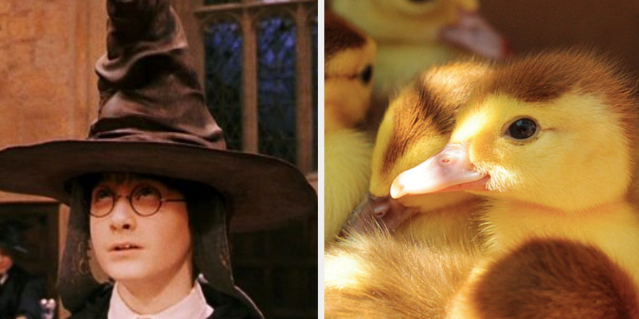 We Know Which Hogwarts House You Belong In Based On The Animals You Choose