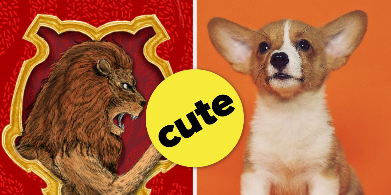 We Know Which Hogwarts House You'd Be Sorted Into From The Pets You Pick