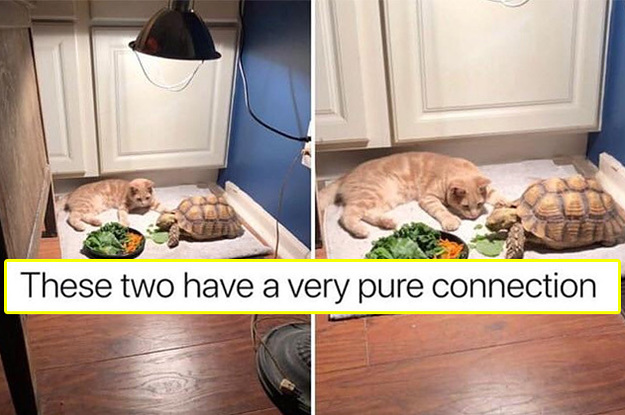 22 Interactions Between Animals That'll Make You ...