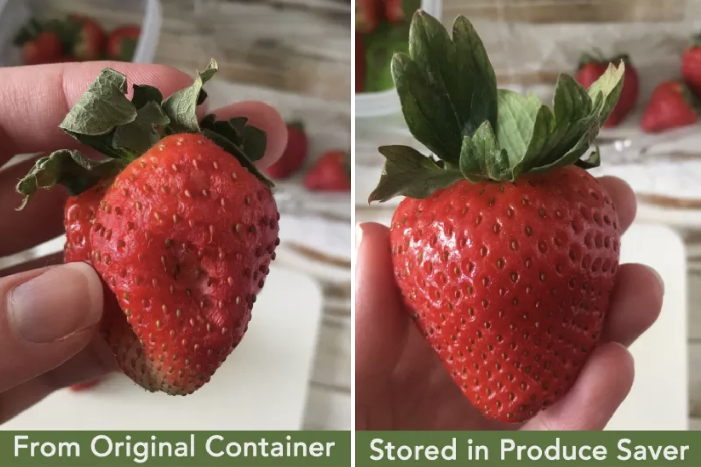 26 Useful Products Designed To Help Your Food Last Longer