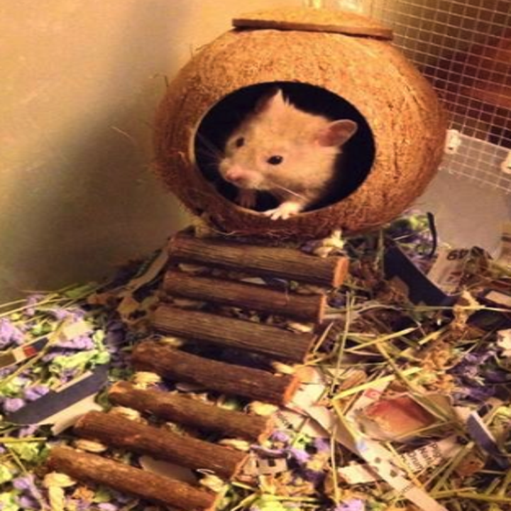 A hamster inside the hideaway