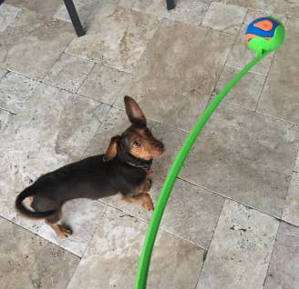 I Guarantee You Will Find Your Pet's New Favorite Toy In This Post