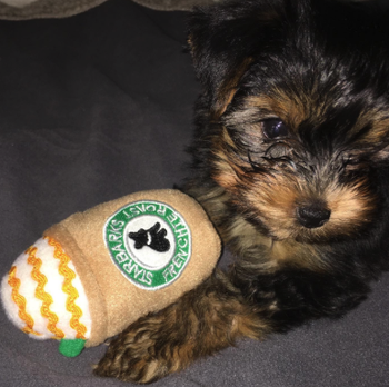 another puppy with different version of the starbucks toy