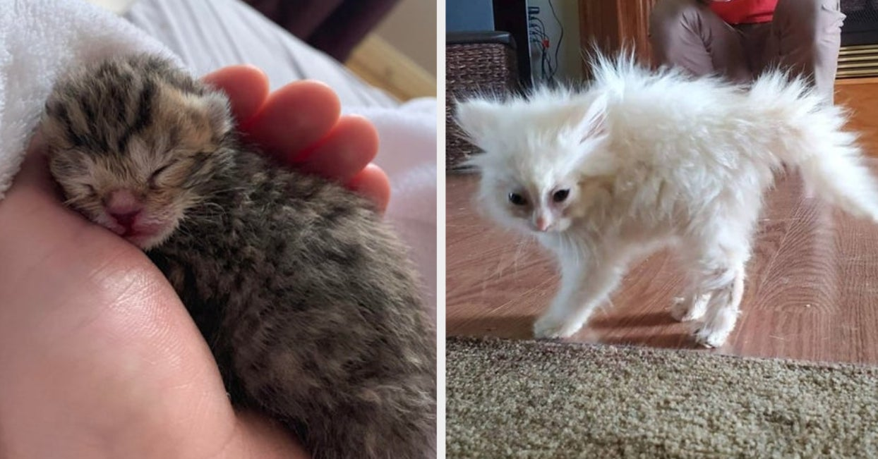 14 Cat Posts From This Week That'll Make You Smile So Big