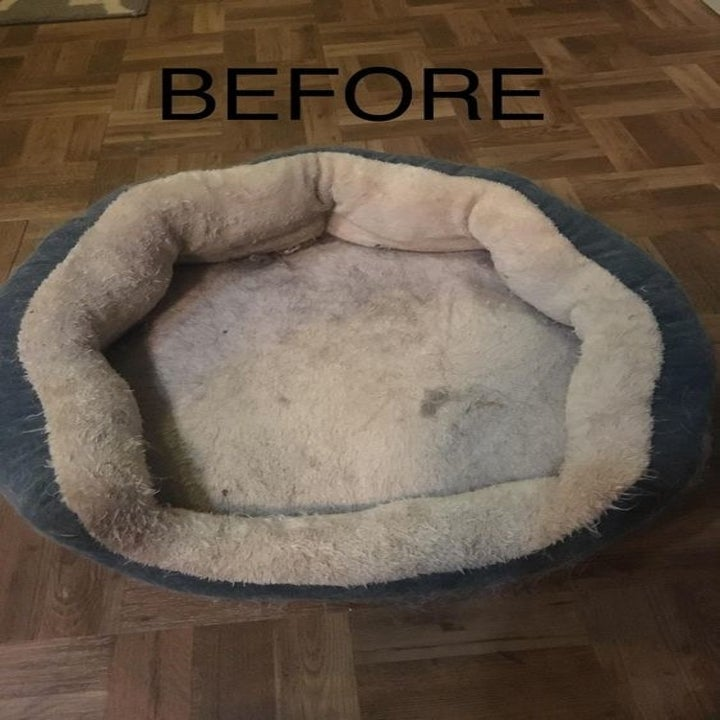 Reviewer's dirty dog bed
