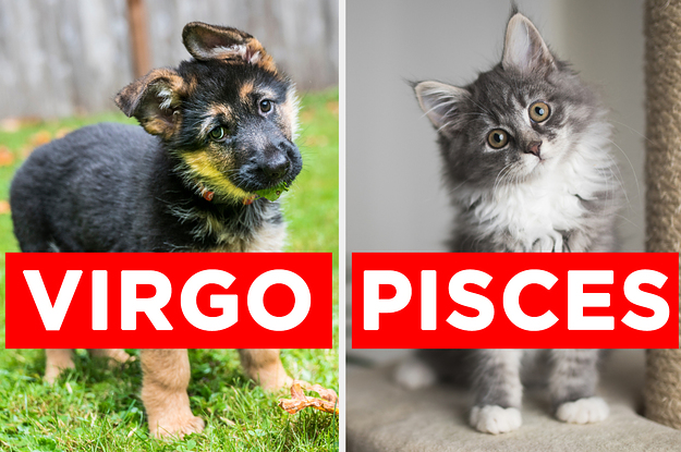 Adopt Some Pets And We'll Guess Your Zodiac Sign With 100% Accuracy