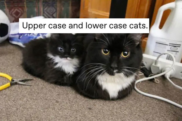 16 Animal Tumblr Posts That Are, Quite ...
