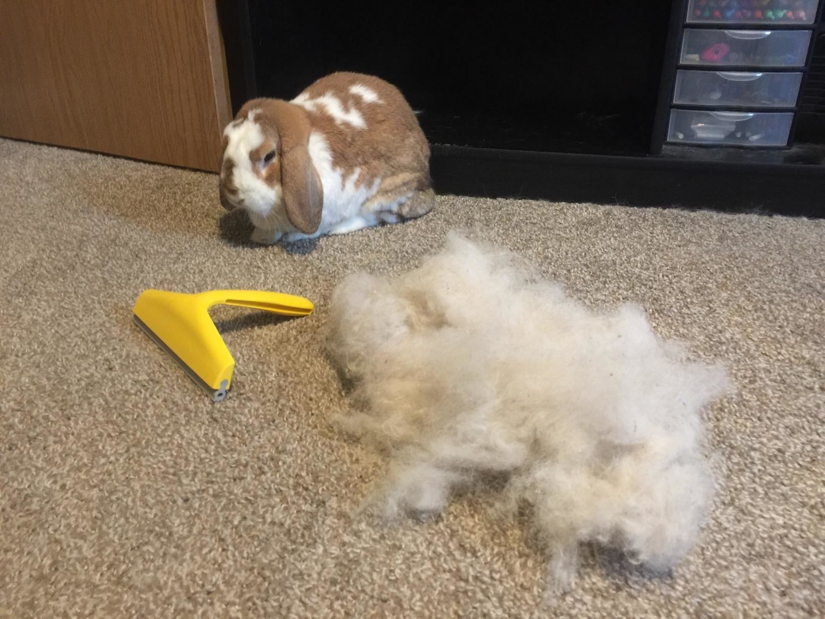 A bunny, the small yellow squeegee, and a pile of hair twice as big as the bunny, all sitting on a reviewer's carpet
