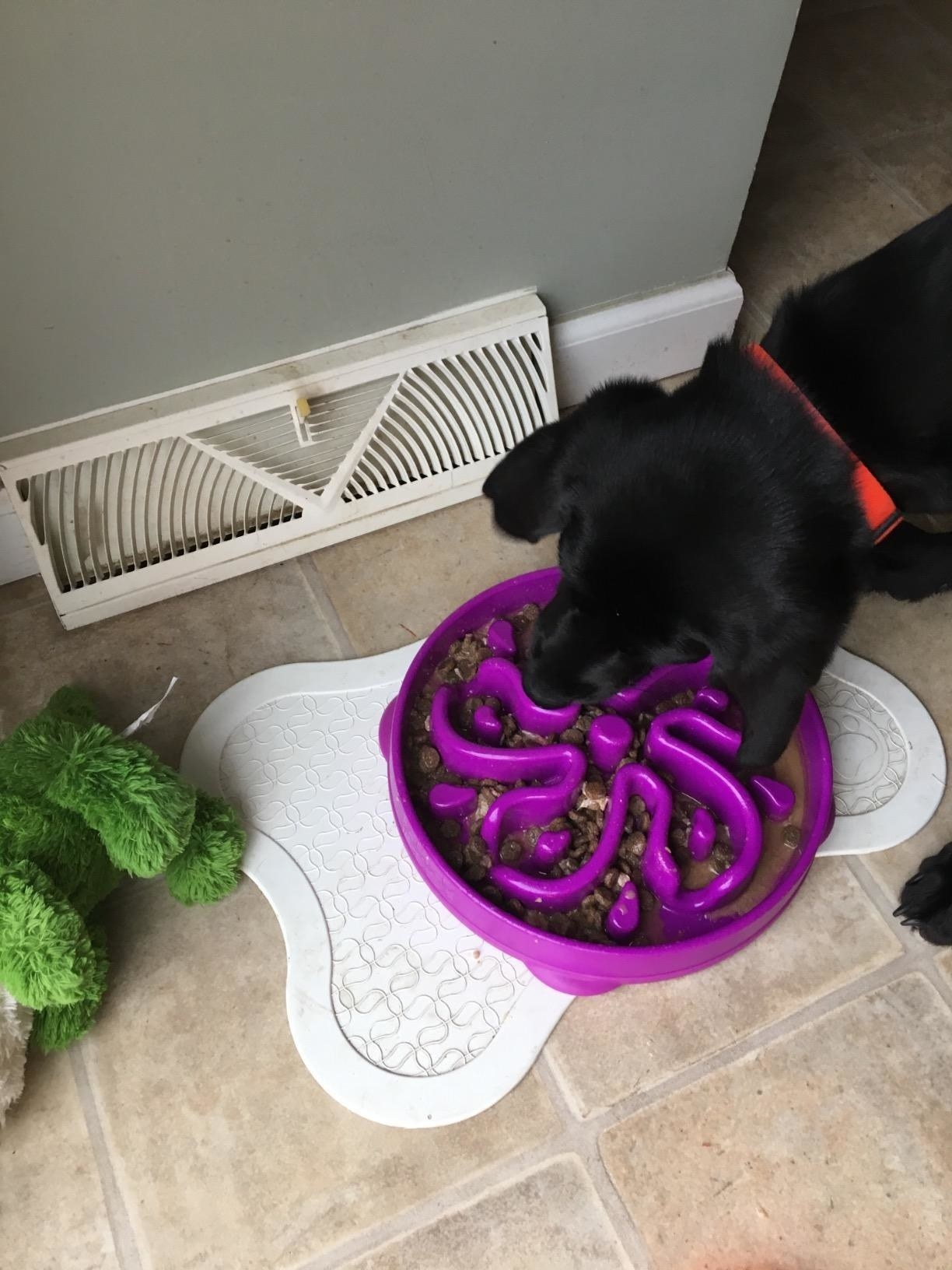 dog using labyrinth like bowl