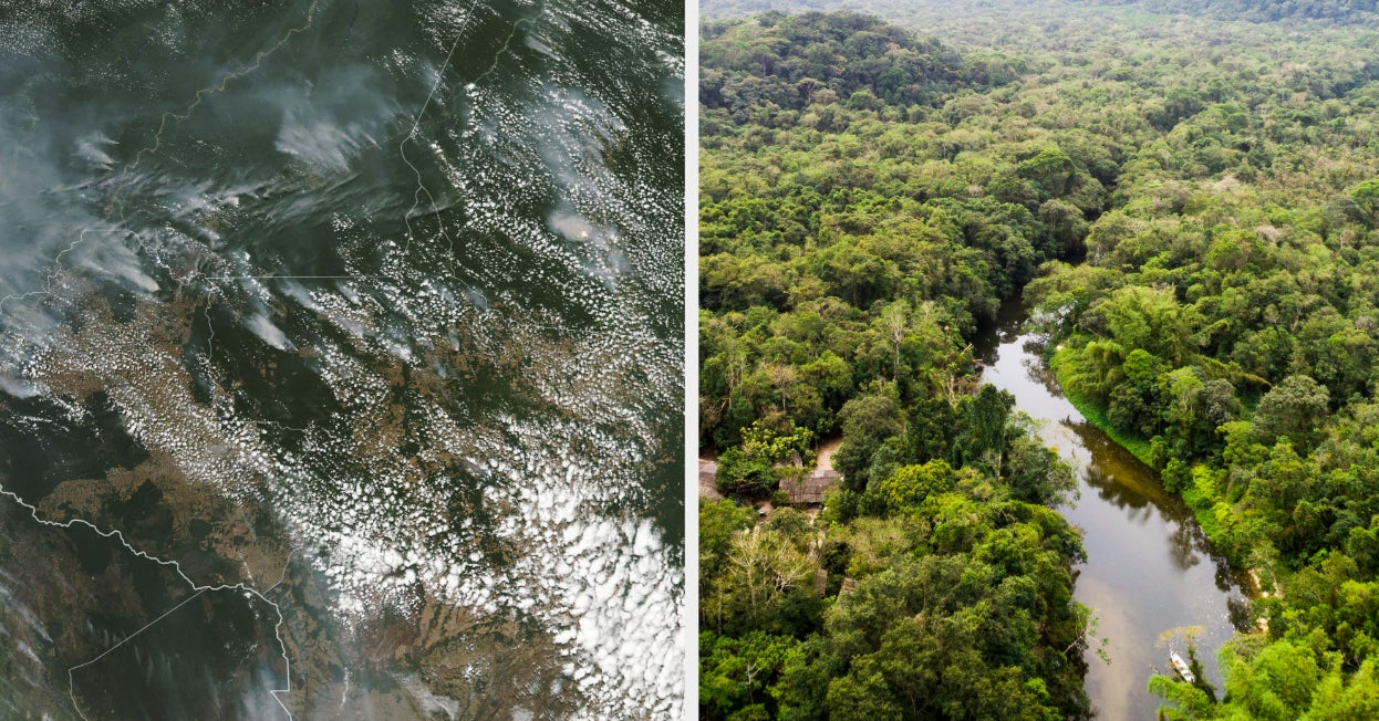 The Amazon Rainforest Is On Fire And We Can't Turn Our Backs On It Now