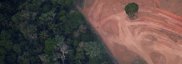 13 Photos Explain What's Going On In The Amazon And What You Can Do