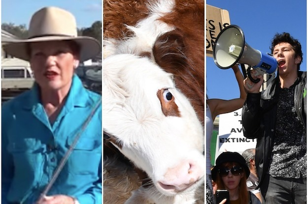 Australian Senator Pauline Hanson Says She Was Suspended From Twitter For Casually Suggesting Cattle Prods Be Used On Protesters