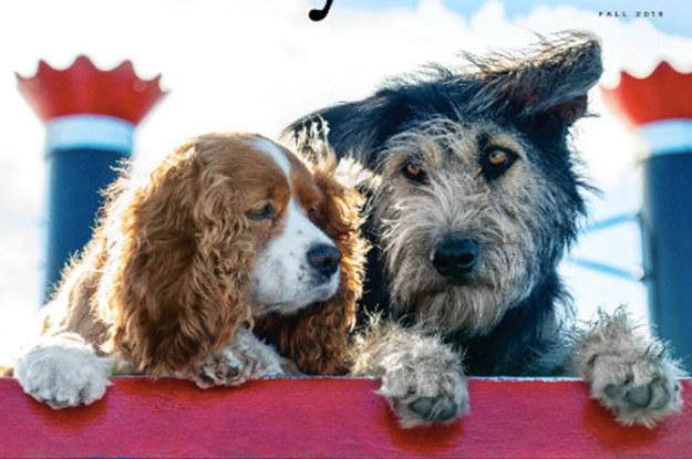 A Rescue Dog Was Chosen To ...