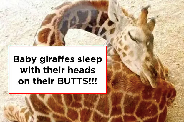 16 Interesting Animal Facts