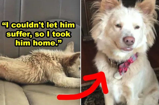 """27 """"Before And After"""" Rescue Dog Pics That'll Make You Feel So Good Inside"""