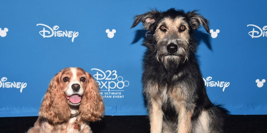 "The Stars (Yes, The Dogs) Of ""Lady And The Tramp"" Walked The Red Carpet And It's All I Care About"