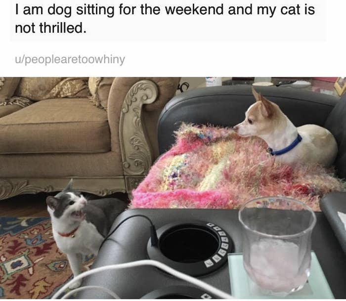 15 Cats That Were Jerks To Dogs And Didn't Care