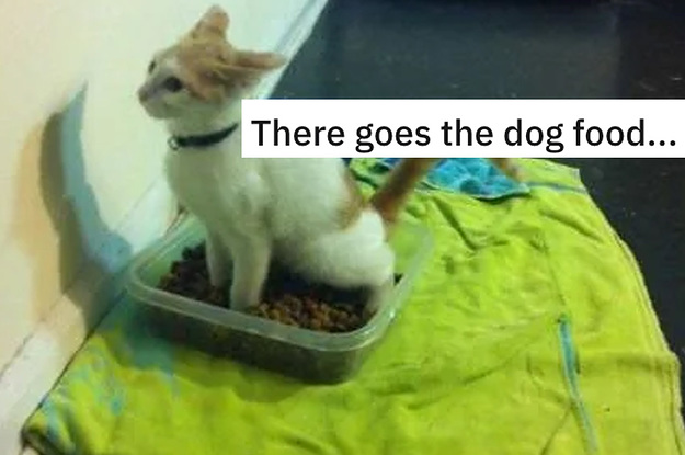 15 Cats That Were Jerks To Dogs And Had Zero Remorse