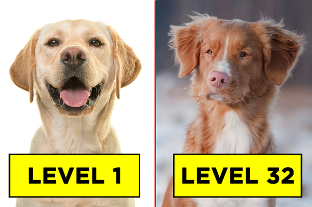 Most People Can't Identify 20 Dog Breeds — Can You?