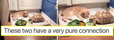 22 Interactions Between Animals That'll Make You Believe There's Good In The World