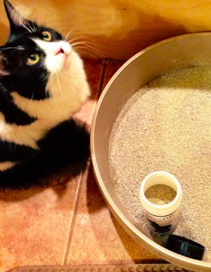 The deodorizer in cat litter and a cat