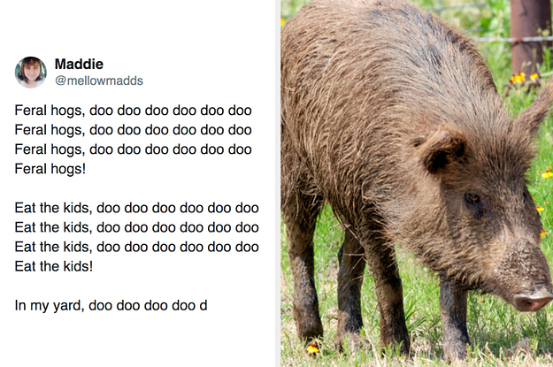 30–50 Feral Hog Tweets That Are The Funniest Of The Bunch