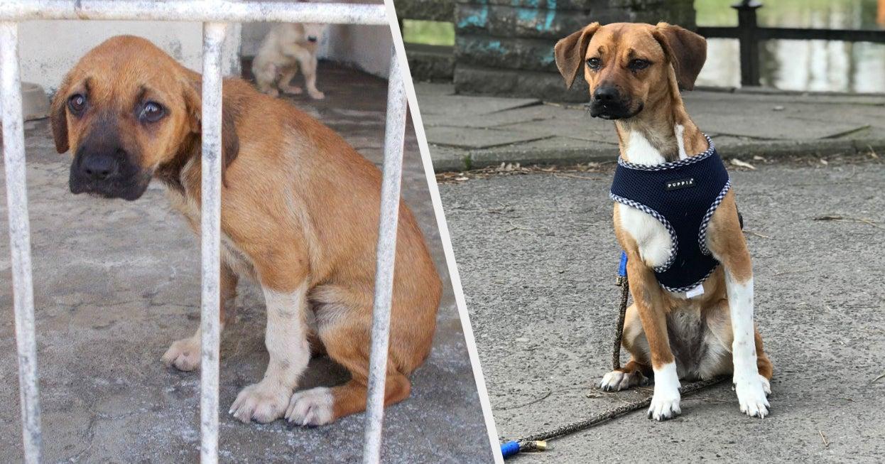 """18 """"Vorher""""- und """"Nachher""""-Fotos, die zeigen, wie wunderbar Tierheim-Hunde sind"""