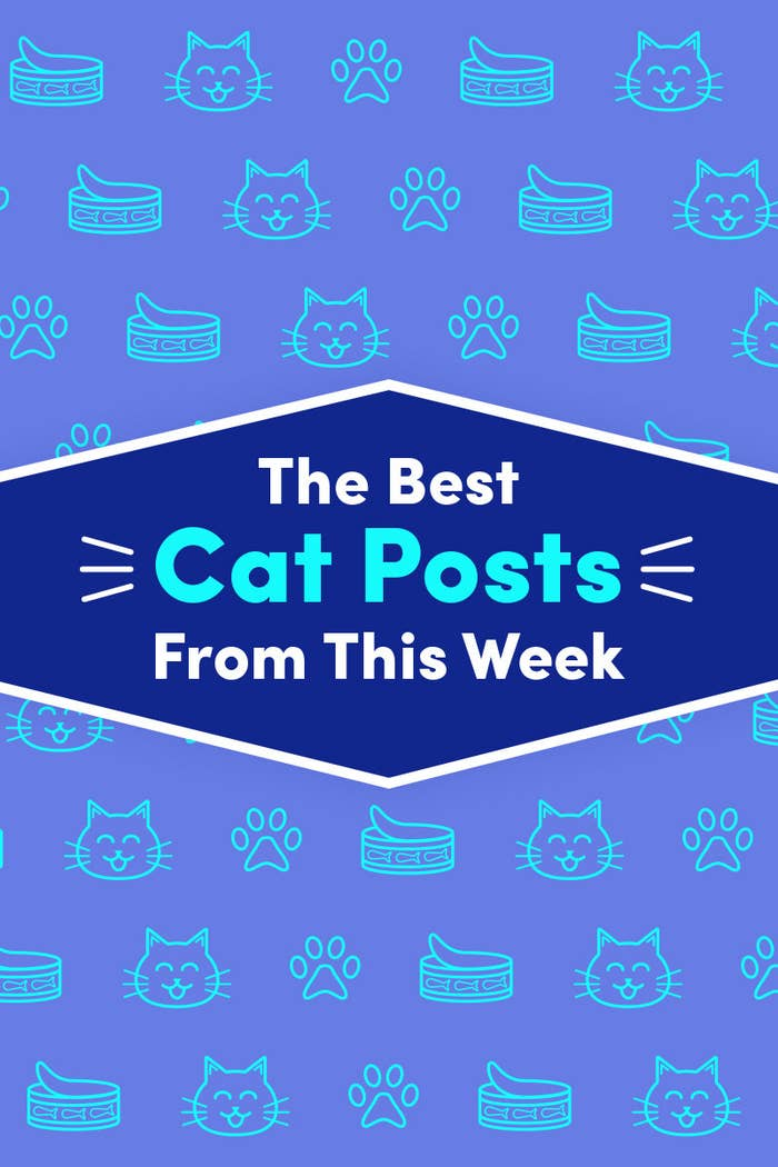 15 Cat Posts From This Week That Are Cute As Can Be