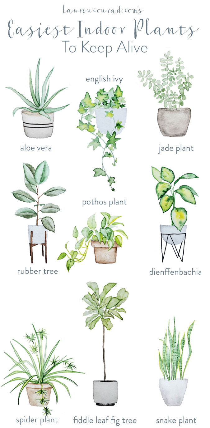 The infographic of plants, including snake plant, fiddle leaf fig, spider plant, rubber tree, and aloe