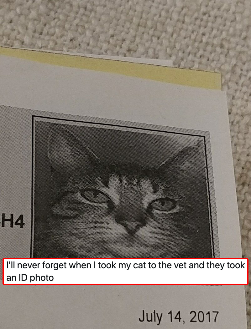 A Tabby Never Forgets