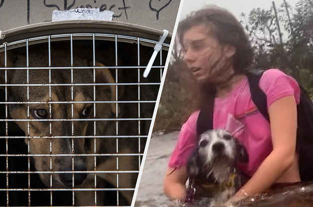 They Lost 113 Of Their Companions In Hurricane Dorian. Now These Dogs And Cats Are Ready For New Homes