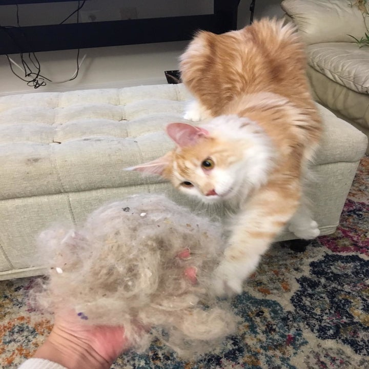 Reviewer photo holding a huge chunk of cat fur that they brushed out of the carpet