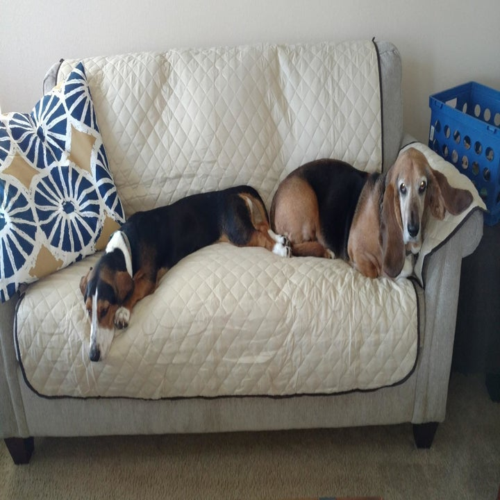 Reviewer photo of two dogs lying on the cover on top of a couch