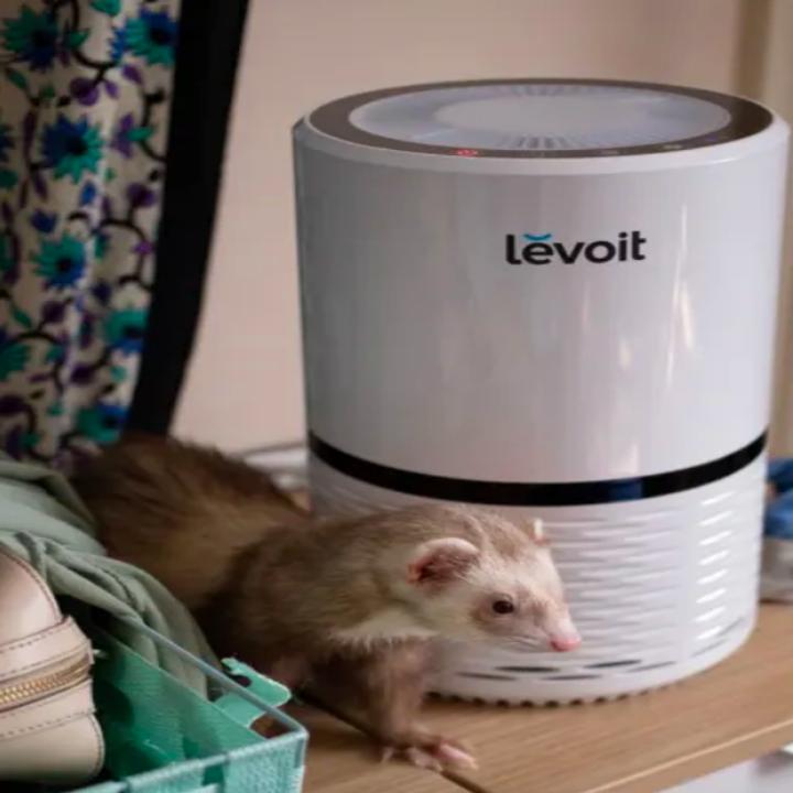 Reviewer's ferret standing beside air purifier