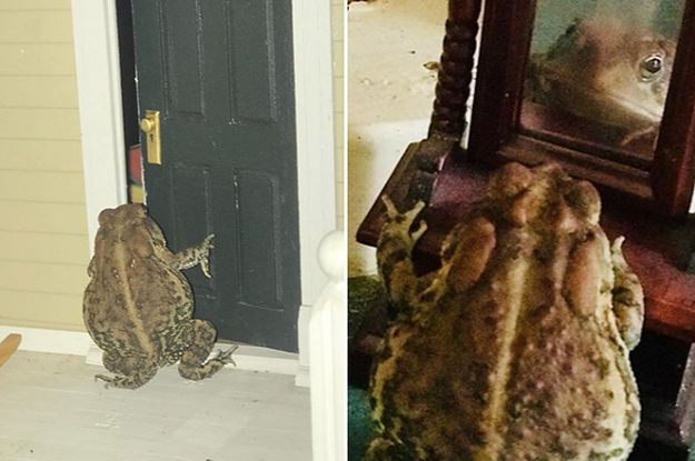 This Toad's Instagram Is The Only Instagram Worth Following, And I Mean That