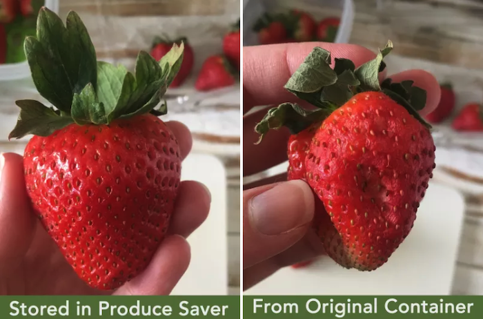 "On the left side is a strawberry that looks fresh. It says ""stored in produce saver."" On the right is one labeled ""from original container"" and it is shriveled up."