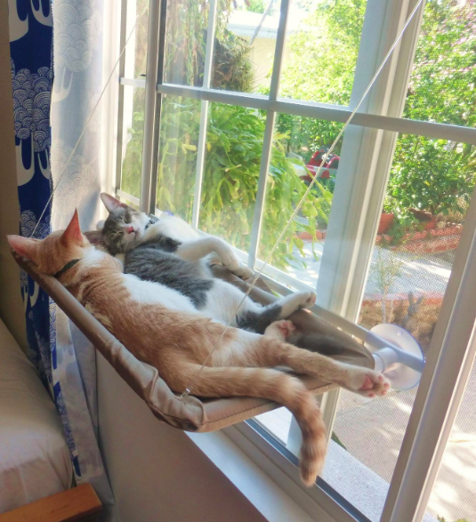 Cats on wall-mounted bed