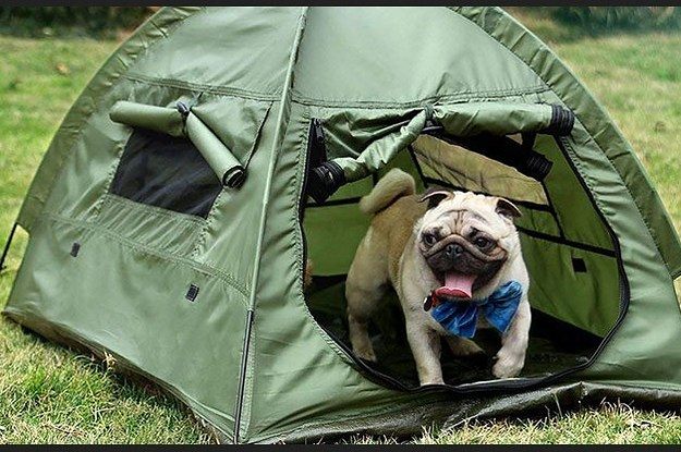 Top 10 Best Camping Tents For Dogs In 2019 – Reviews