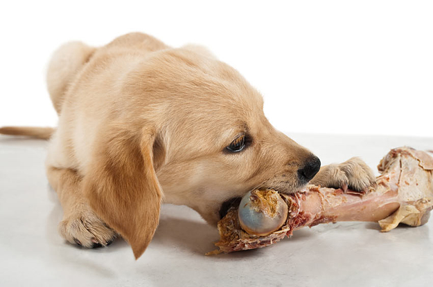 Pets : Top 10 Human Foods That Are Dangerous For Dogs