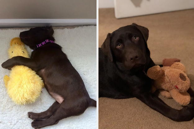 27 Dog Products With Satisfying Before-And-After Photos