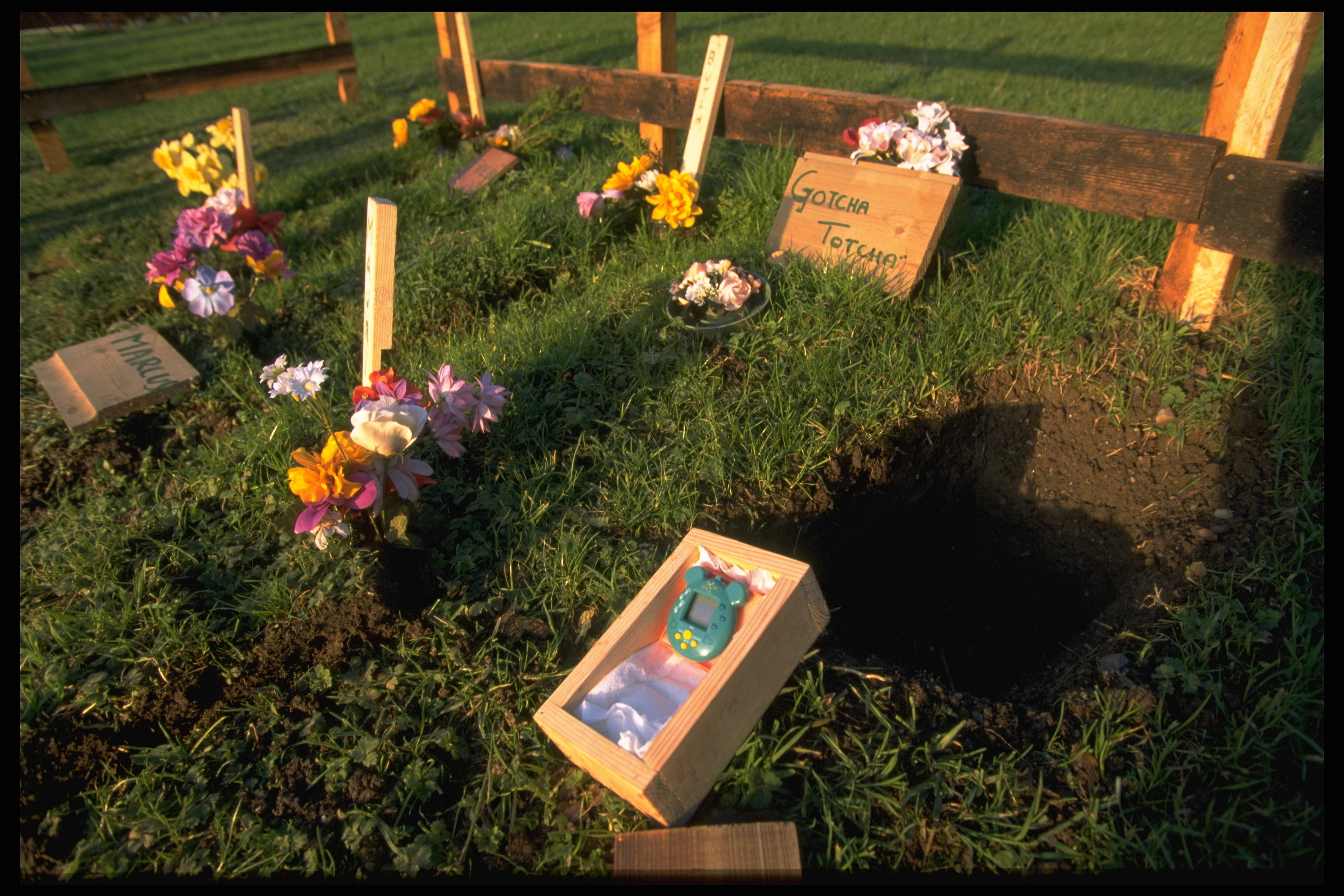 A photo of Tamagotchi gravesite in the English countryside.