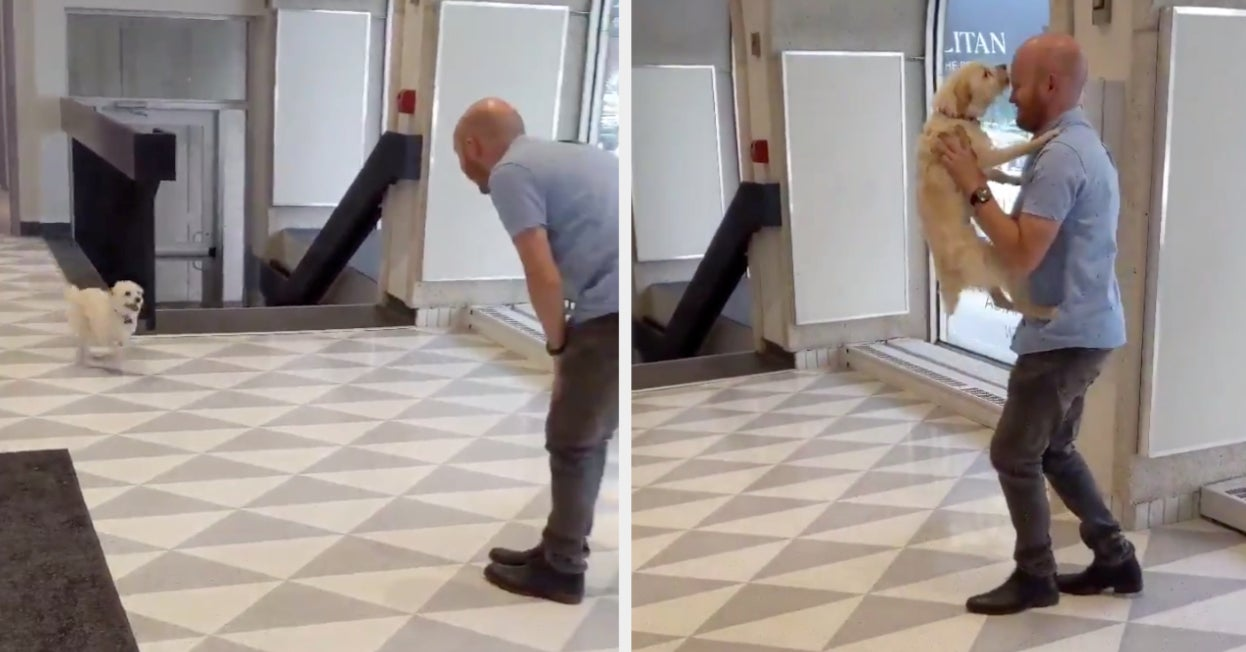 14 Heartwarming Tweets Of Dogs Getting Picked Up From Daycare