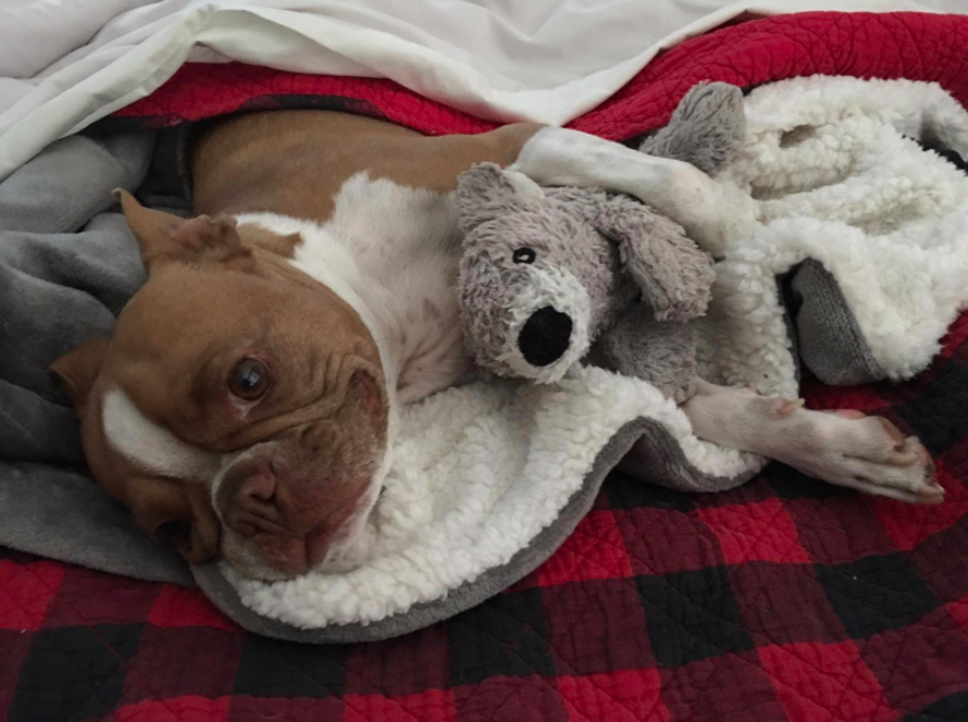 A customer review photo of their dog wrapped in the blanket