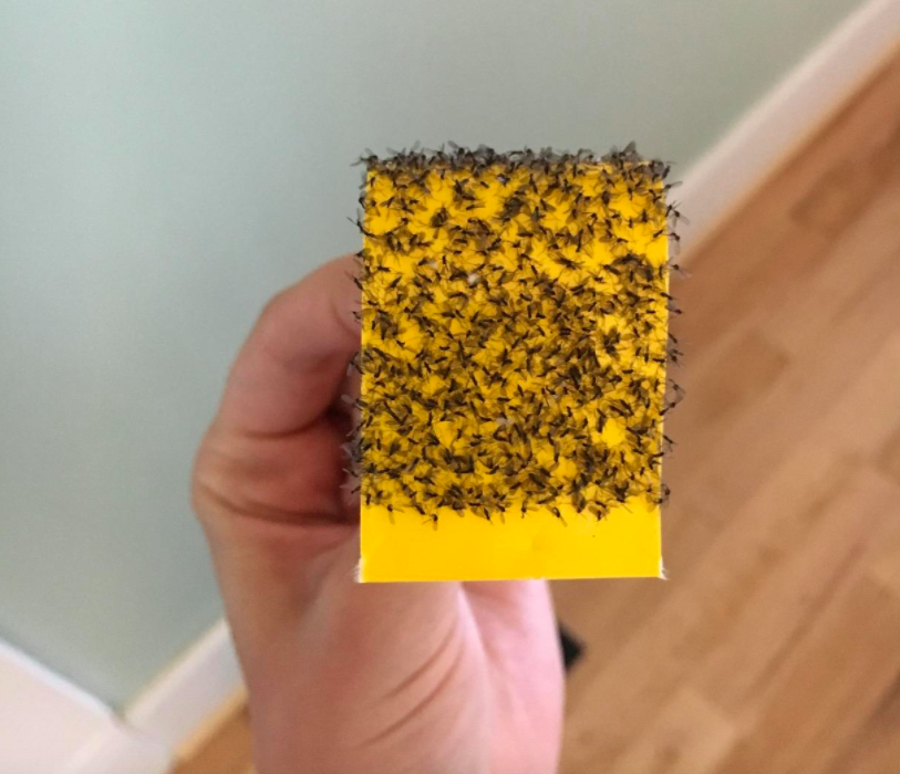 A customer review photo of the sticky paper filled with bugs