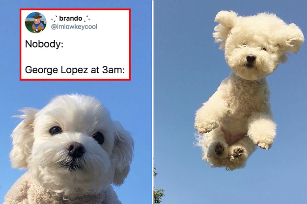 15 Dog Posts From This Week That Are Just What The Doctor Ordered