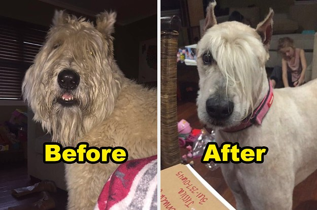 18 Times Dog Groomers Really Went The Extra Mile